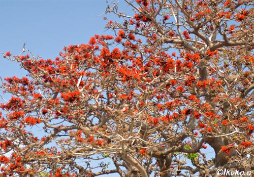 枝を広げた大木