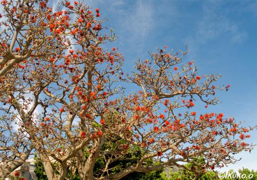 久松公民館の大木