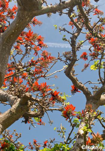 青空に向けてのびる枝