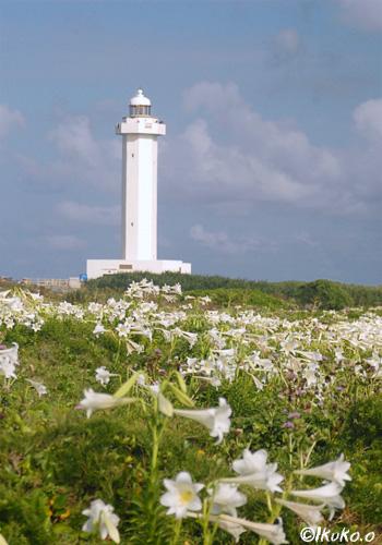 満開の百合と灯台
