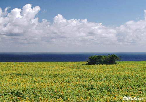 雲と海とひまわり畑