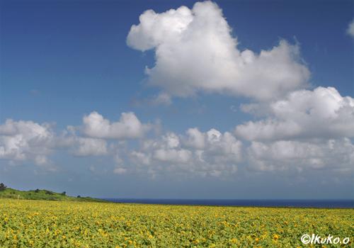 雲と黄色の絨毯