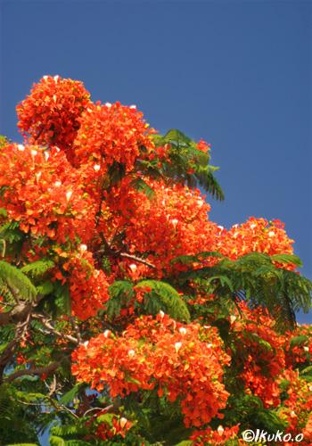 絢爛豪華な花々