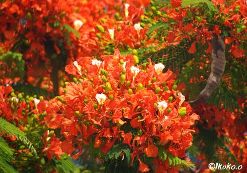 絢爛豪華な花