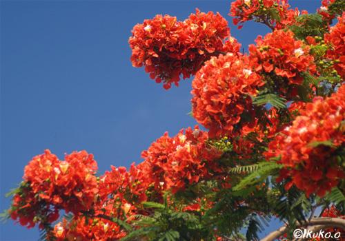 頭上の花々