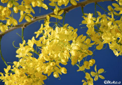 青空に映える黄色