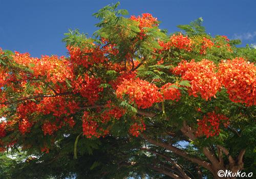 花のパラソル
