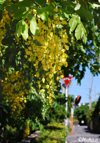 道路沿いに咲く花