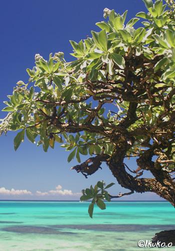 青い海とモンパの木