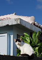 冬の島猫たち