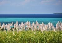 冬のさとうきび畑と海・風・光