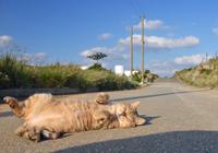 さとうきび畑で出会った島猫