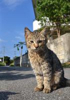 路地で出会った島猫tたち