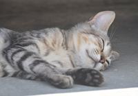 島猫ひなちゃん