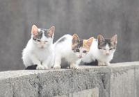 島猫三兄弟