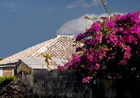 花の咲く家々