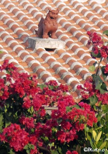 赤瓦屋根とブーゲンビレア