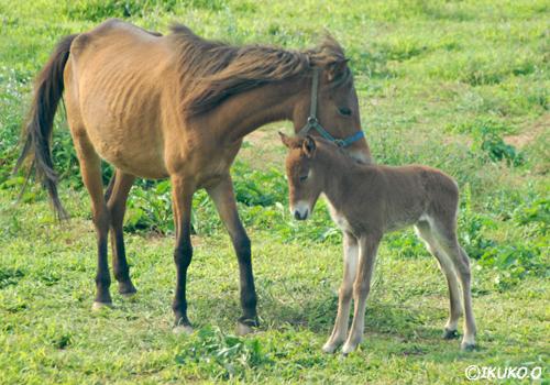 子供を気遣う母馬