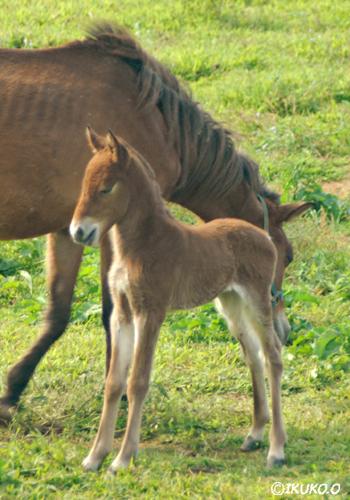 生まれたばかりの子馬