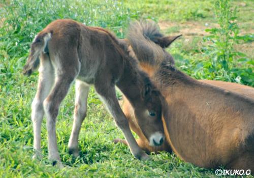 母親に寄り添う子馬