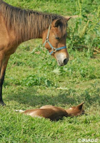 子馬を見守る母馬
