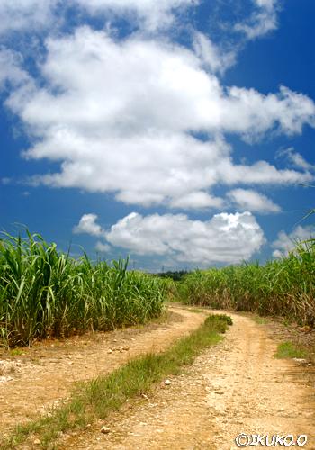さとうきび畑と雲