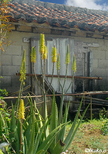 集落の古い民家
