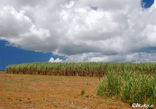 サトウキビ畑に広がる雲