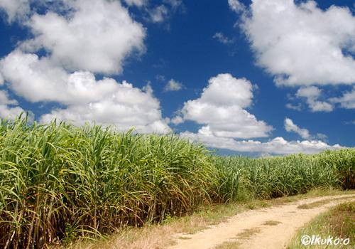 夏空とさとうきび畑