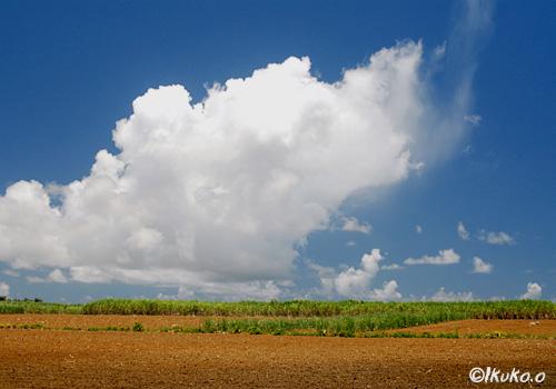 広大な畑と雲