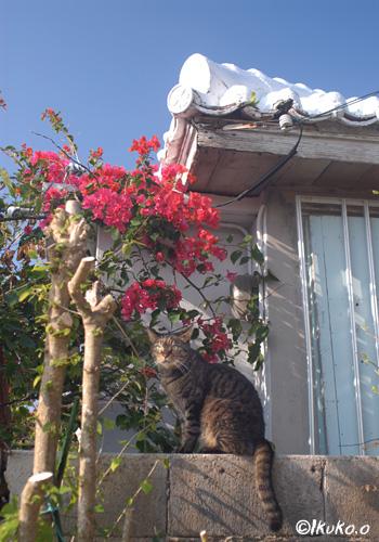 シーサーのような猫