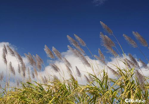 風に流れる雲とさとうきび畑