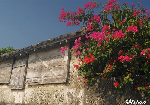石壁とブーゲンビレア