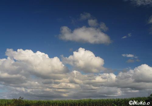 雲の子供達