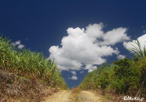 さとうきび畑と夏空