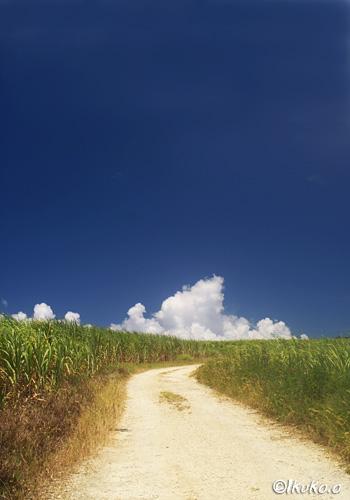 真夏のさとうきび畑