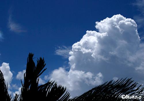 真夏の入道雲