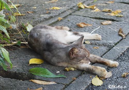 道端で寝そべる島猫