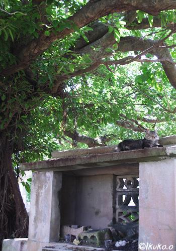 御嶽の島猫