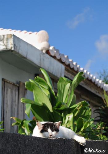くつろぐ島猫