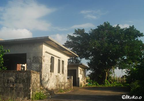 ガジュマルの木と民家