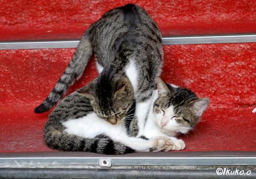 親子の島猫