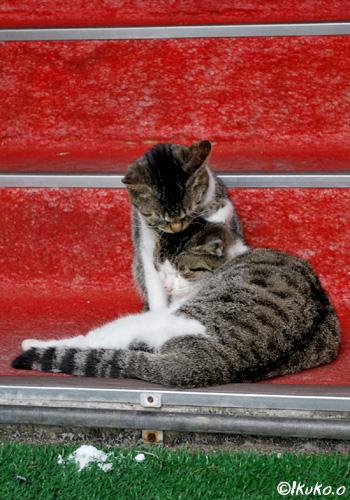 身を寄せ合う島猫