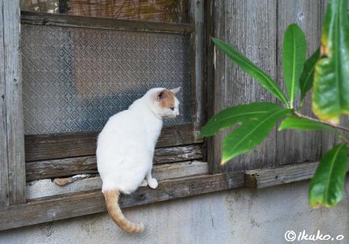 窓枠にとまった島猫