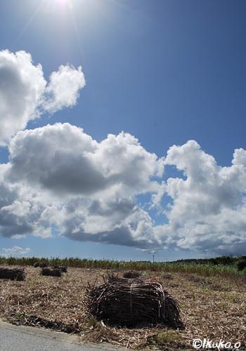 収穫されたキビと雲