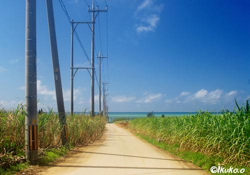 さとうきび畑と海へ続く道
