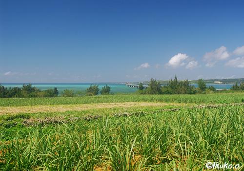 畑の緑と海の青