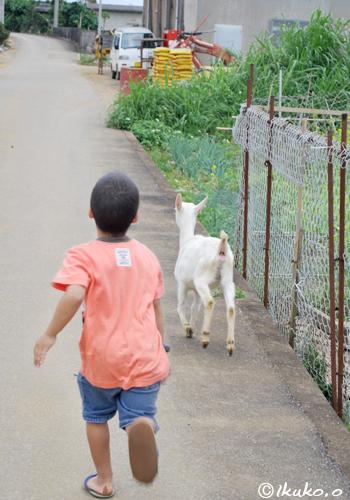 脱走ヤギと子供の追いかけっこ