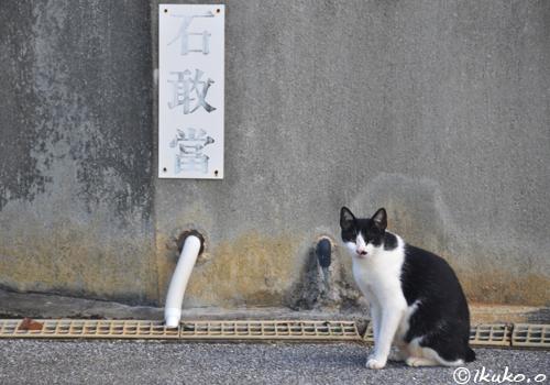 石敢當と島猫