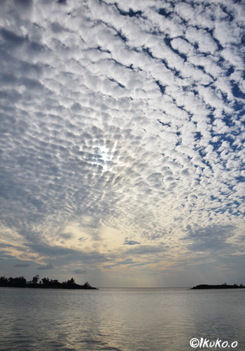 太陽を包み込むうろこ雲